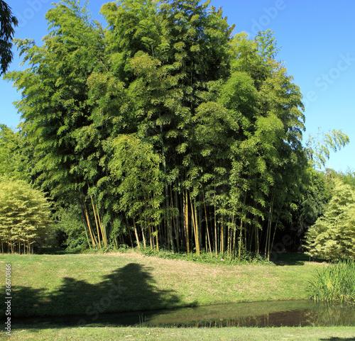 Canvas Bamboe petite forêt de bambous en culture