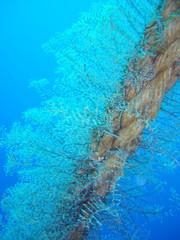 bewachsenes Seil unter Wasser