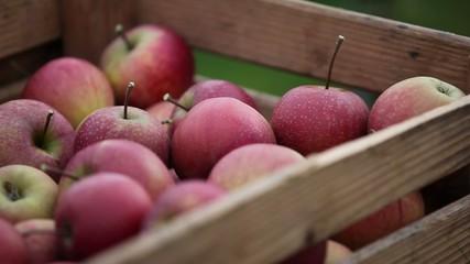 Holzkiste mit Äpfeln gefüllt