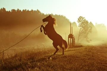 Wild the horse
