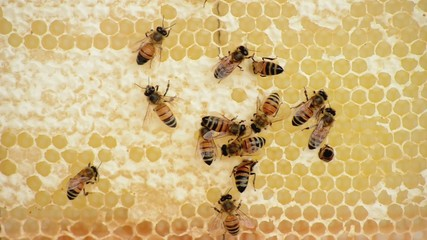 Bees and Honey  Api e miele