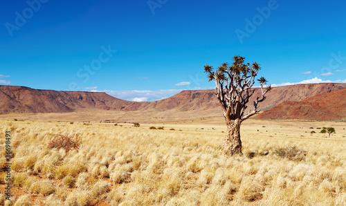 Desert landscape - 36698493