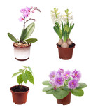 set of potted plants
