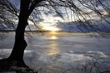Kahler Baum am winterlichen See