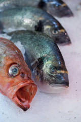 poissons rascasse
