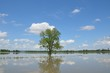 tree-in-flood-water