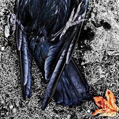 Crow+Leaf: Wanlockhead