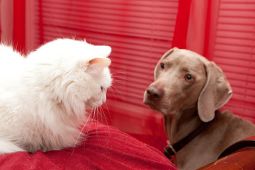 White cat and a dog
