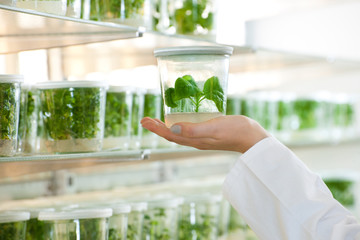laboratory with plants