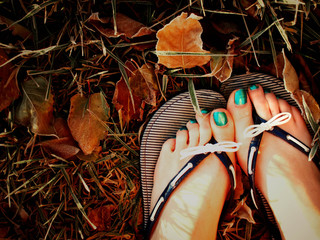 Beauty-of-Fall