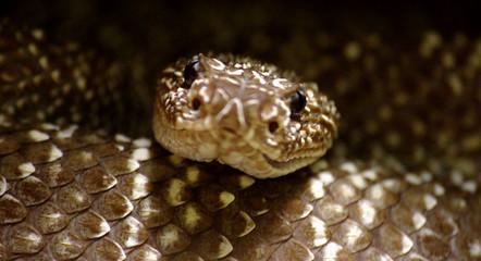 Reptiles 5