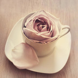 Warm-Cup-of-Rose