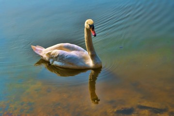 Reflecting-on-a-Swan