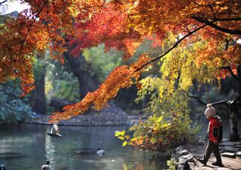 Herbst auf der Margareteninsel