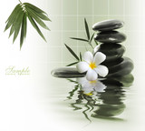 frangipani and stones on the water