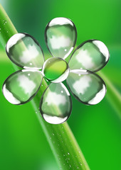 Flower from water drops on a green background