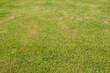 GRASSS TEXTURE