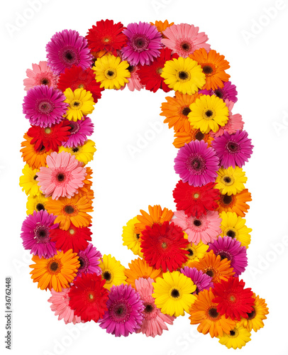 Letter Q - flower alphabet isolated on white