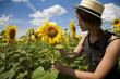 Walk in a sunflower field