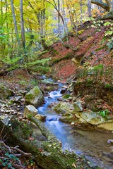 small brook in a autumn canyon