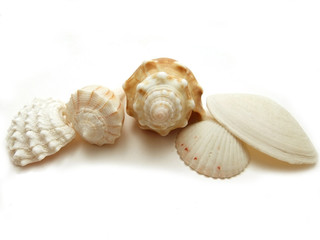 Seashell collection from Florida
