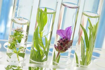 Recherche - Pharmacie  & Phytothérapie