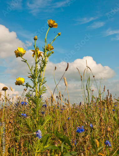 Wild plants and flowers along a Dutch field