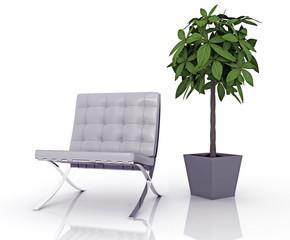 Sedia e pianta