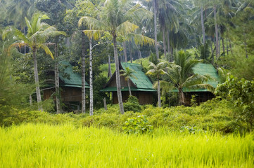 Bungalows hidden in tropical vegetation