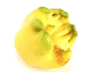 limone pittoresco