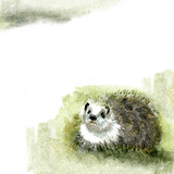 Watercolor Fauna Collection: Hedgehog poster