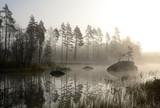 The foggy autumn's landscape
