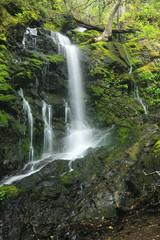 Waterfall in the lush rainforest of Uvas Caynon California