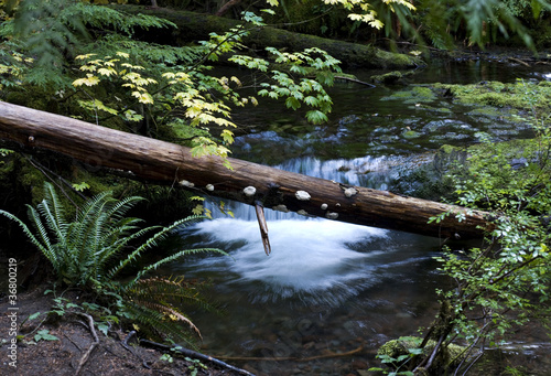 Fallen Logs in Creek