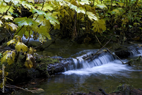 Creek Near Proxy Falls