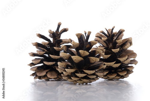 Three Pine Cones on White with Subtle Reflection
