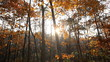 Autumn forest sunrise