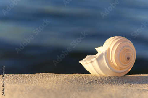 Sommerabend am Meer, Strandgut, Tonna Allium