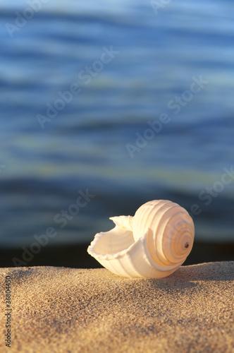 Urlaubsträume, Strandgut, Meeresschnecke