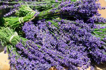 Garten Lavendel Hidcote Blue