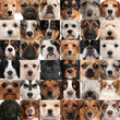 Collage of 36 dog heads