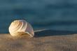 Strandgut, Sommerabend am Meer, Tonna Allium