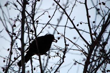 Amsel im Baum