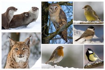 Tiere im Winter