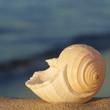 Meeresrauschen, Reisezeit, Urlaub, Meeresschnecke