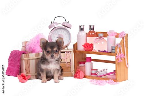 Glamour puppy grooming