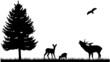 Wald Wiese Feld Silhouette Landschaft Tiere