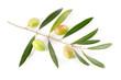 Ramo di olive