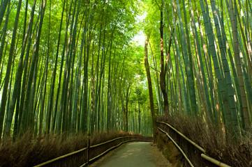 Bamboo grove © Fyle