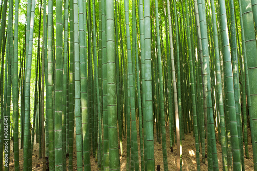 Foto Spatwand Bamboe Bamboo forest